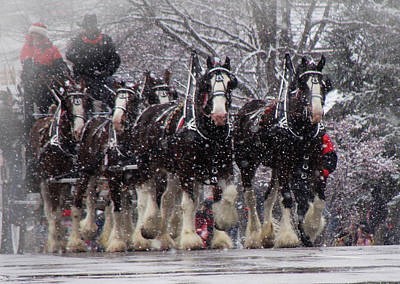 Clydesdale Hitch Print by Nancy Bairnsfather