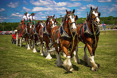 Photograph - Clydesdale Horses by Robert L Jackson
