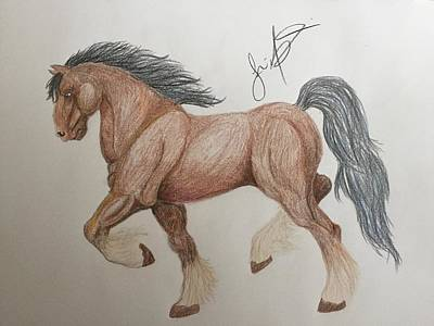 Clydesdale Drawing - Clydesdale by Jessica Malise