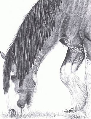 Clydesdale Drawing - Clydesdale by Leslie Becker