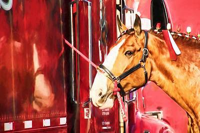 Photograph - Clydesdale Red by Alice Gipson