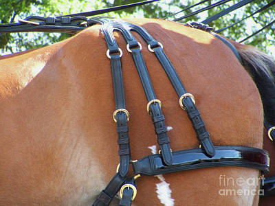 Photograph - Clydesdale Tack by Rich Collins