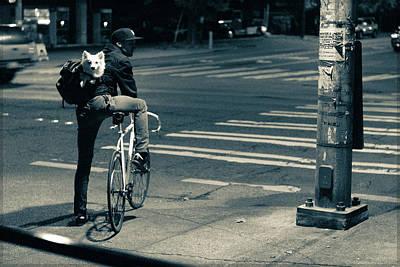 Photograph - Co Pilot by Kevin Rosinbum EyewandersFoto