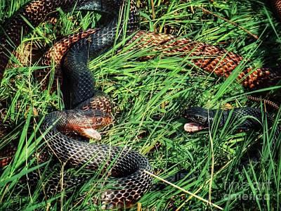 Coachwhip Snakes Waiting Art Print by John Myers