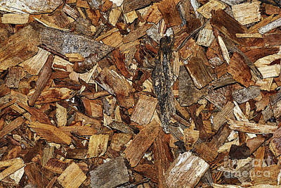 Photograph - Coarse Wood Chips Abstract By Kaye Menner by Kaye Menner