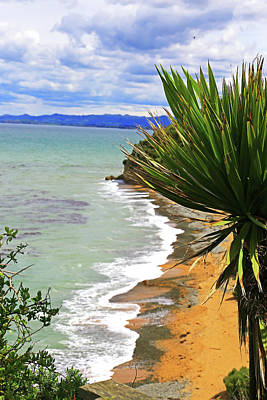 Photograph - Coast And Cabbage Tree by Nareeta Martin