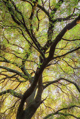 Photograph - Coast Live Oak Dna by Alexander Kunz