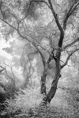 Photograph - Coast Live Oaks In Morning Fog by Alexander Kunz
