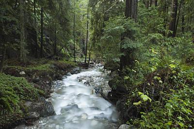 Photograph - Coast Redwood Forest Big Sur California by Sebastian Kennerknecht