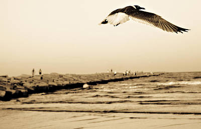 Photograph - Coastal Bird In Flight by Marilyn Hunt