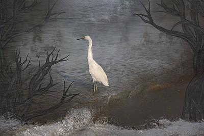Photograph - Coastal Birds by Athala Carole Bruckner