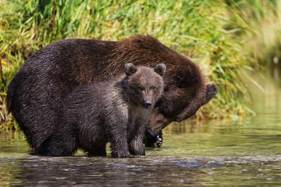 Owens River Photograph - Coastal Brown Bear And Cub Fishing by Marion Owen