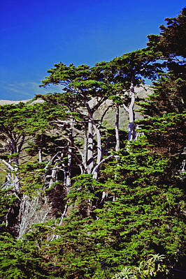 Photograph - Coastal Cypress Trees by Gary Brandes