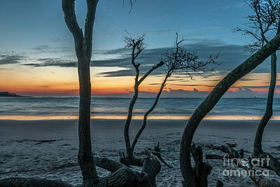 Photograph - Coastal Dead Wood Sunrise by Dale Powell