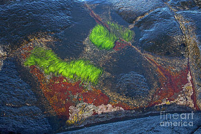 Abstract Forms Photograph - Coastal Floor At Low Tide by Heiko Koehrer-Wagner