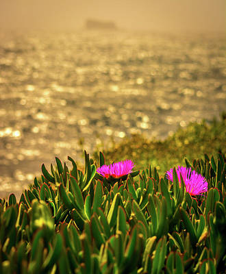 Photograph - Coastal Flowers by Andrew Matwijec