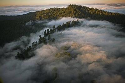 Natural Forces Photograph - Coastal Fog Covers Humboldt Redwoods by Michael Nichols