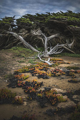 Photograph - Coastal Guardian by Jason Roberts