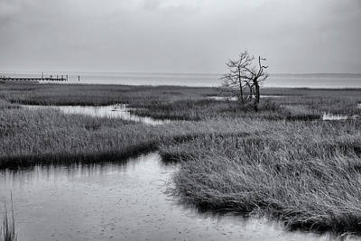 Photograph - Coastal Marshland by Debby Richards