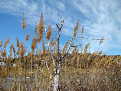 Christmas Christopher And Amanda Elwell - Coastal New England Marsh Landscape by Carol Senske