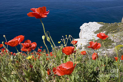 Scarlet Photograph - Coastal Poppies by Richard Garvey-Williams