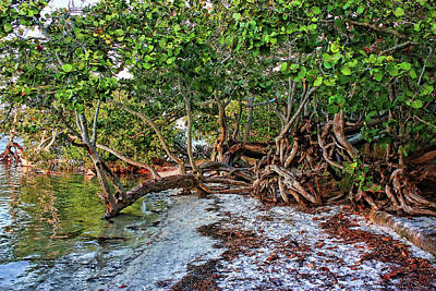 Photograph - Coastal Seagrapes And Mangroves by HH Photography of Florida