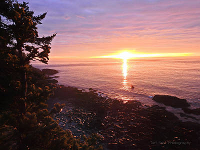 Photograph - Coastal Sunrise by Teri Ridlon