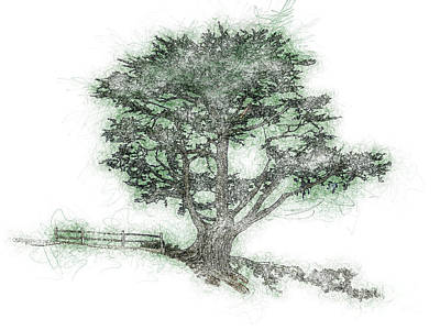 Drawing - Coastal Tree Sketch by Methune Hively