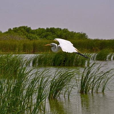Photograph - Whooping Crane II by Kristina Deane