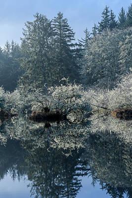 Photograph - Coastal Wetlands by Robert Potts