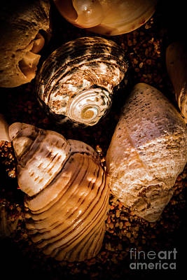 Decorative Fossil Photograph - Coastline Shells, Marine Still Life Art by Jorgo Photography - Wall Art Gallery