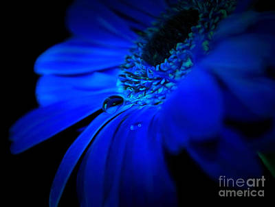 Flowers And Water Drops Wall Art - Photograph - Cobalt Blues by Krissy Katsimbras