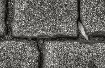 Photograph - Cobblestone And Feather by Michael Kirk