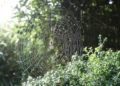 Photograph - Cobweb by Julia Woodman