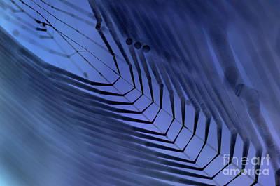 Fine Thread Photograph - Cobweb by Michal Boubin