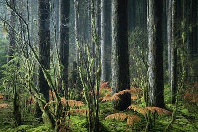 Photograph - Cobwebs And Tree Trunks by Adam Gibbs