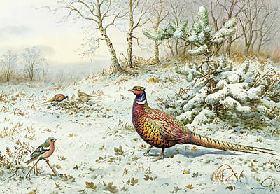 Pheasant Wall Art - Painting - Cock Pheasant And Chaffinch by Carl Donner
