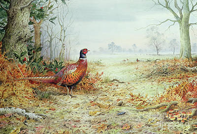 Pheasant Painting - Cock Pheasant  by Carl Donner
