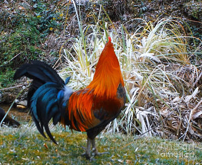 Photograph - Cock Walk II by Donna Dixon