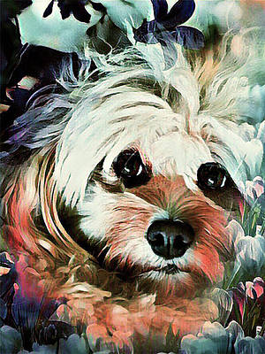 Digital Art - Cockapoo Puppy by Kathy Kelly