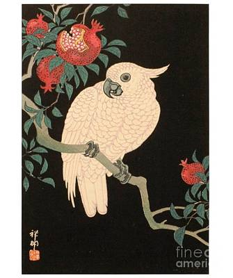 Cockatoo And Pomegranate Art Print by Reproduction