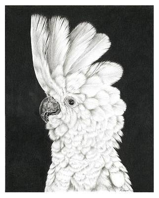 Cockatoo Drawing - Cockatoo by Remrov