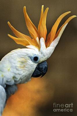 Digital Watercolor Photograph - Cockatoo Show Off by Norman  Andrus