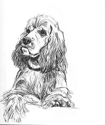 Cocker Spaniel Drawing - Cocker Spaniel by Charme Curtin