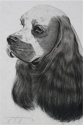 Cocker Spaniel Drawing - Cocker Spaniel Dog Study by Jimmy Quinzon