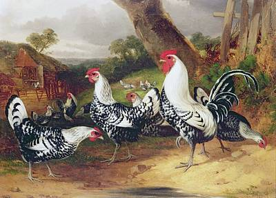 Cockerel Painting - Cockerels In A Landscape by William Joseph Shayer