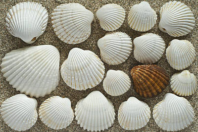 Cockles Collection Art Print by Igor Voljch