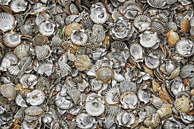 Photograph - Cockleshells 1 by David Birchall