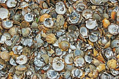 Photograph - Cockleshells 2 by David Birchall