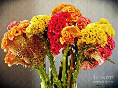 Photograph - Cockscomb Bouquet 3 by Sarah Loft